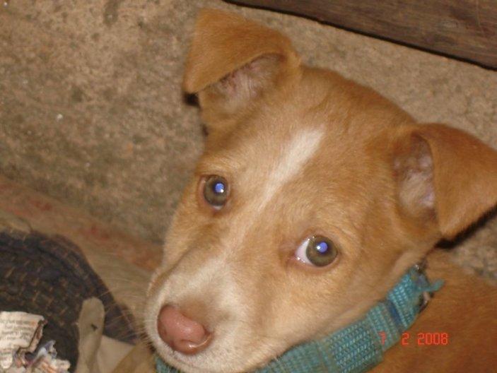 My blue-eyed boy, Simbla.