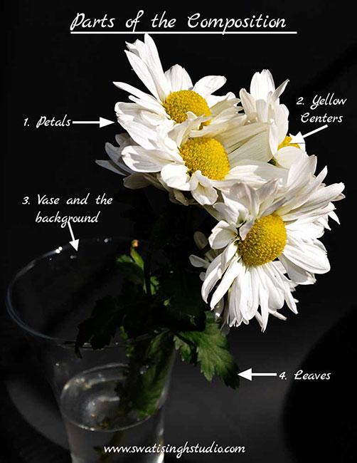 Daisy Flower Parts : daisy, flower, parts, Daisies, Watercolor