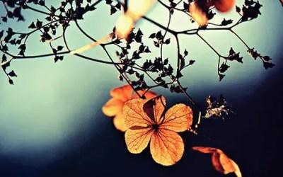 તું છેતરી ગયો! – Gujarati Poetry