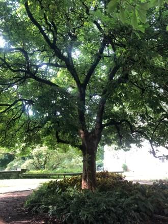 Wharton Magnolia