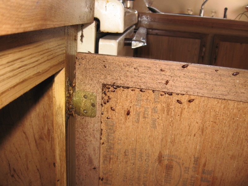 roaches in trailer 010 800x600  SwatTeam Pest Control