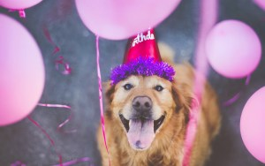 Vaccination Birthday reminder for dogs bangalore