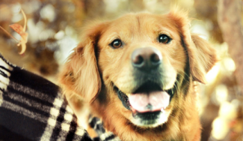 best names for male golden retrievers