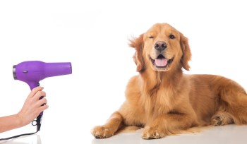 Best Dog Grooming Places in Bangalore