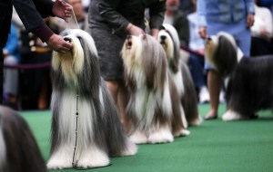 dog show in bangalore