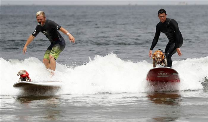 Meet These Amazing Dog Surfers at the Annual Dog Surfing Championships