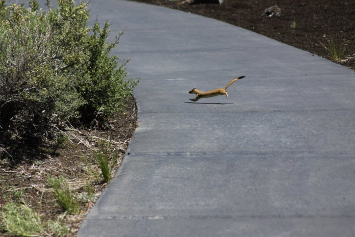 Wild Life living among Craters of the Moon.
