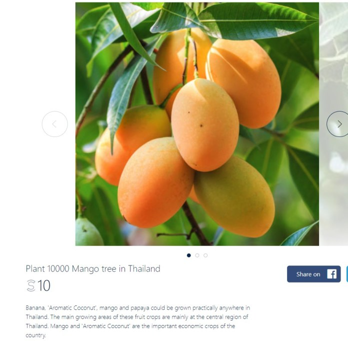 SweatcoinBlog - Mango Tree Adoption in Thailand