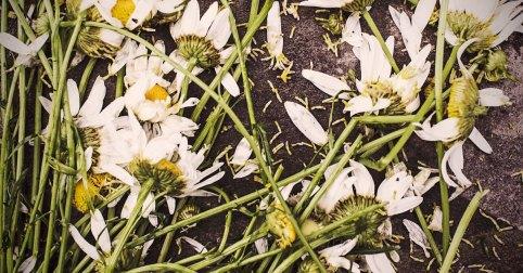 Dead-flowers-fb