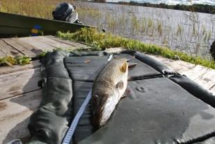 pike lake fishing northern sweden holiday