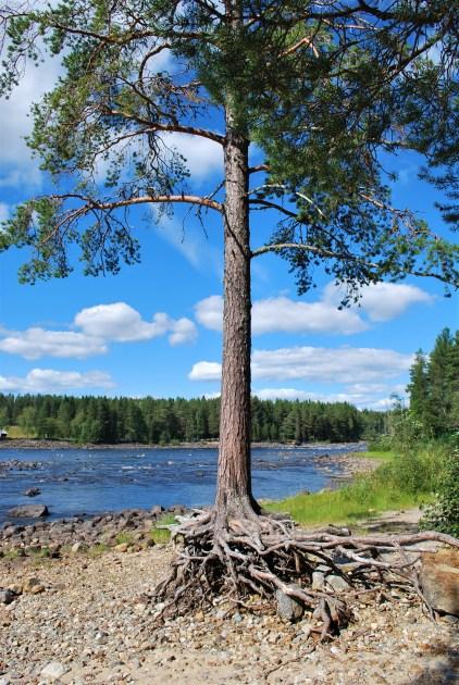 Vindeln River