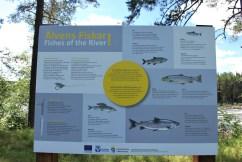Vindeln River fish ID board