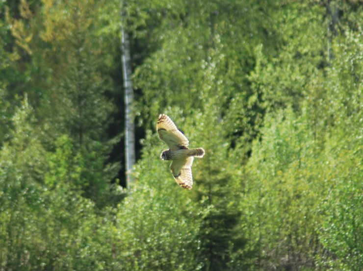 Photo by sweden fishing and birding, Vasterbotten, Northern Sweden.
