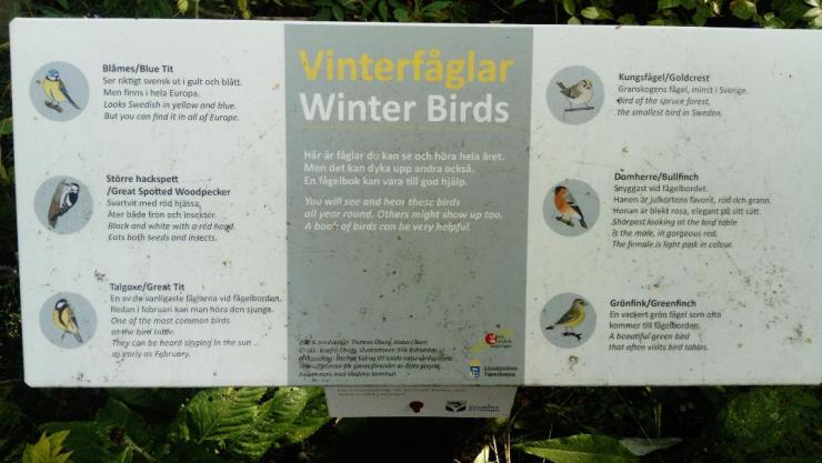 Winter birds in Vindeln Nature Reserve
