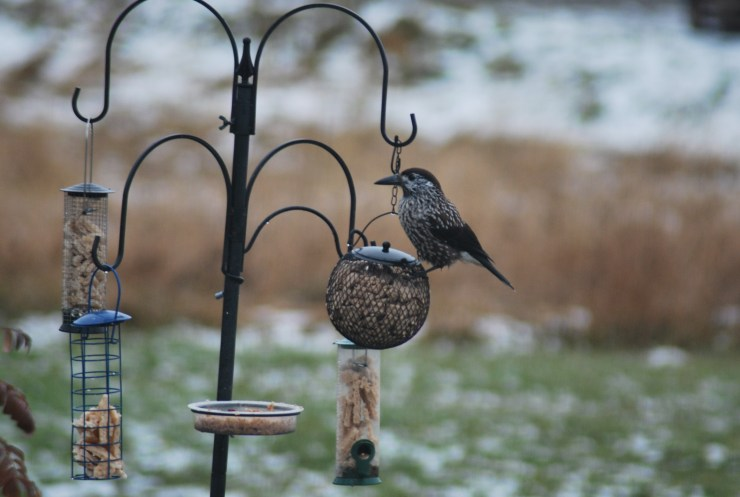 Fantastic birding made easy in Sweden.