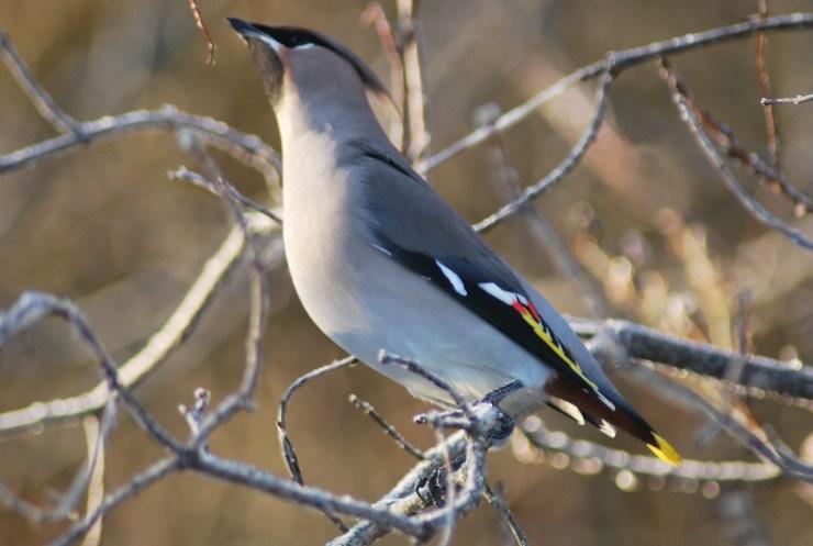 Sweden bird watching trip.