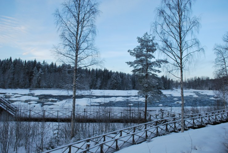 When will the White-tailed eagle choose to hunt now the river is part free from ice?