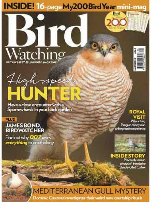 Bird Watching UK March 2020 sweden fishing and birding