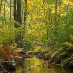 [スウェーデンの森]スウェーデンの森を満喫できる権利Allemansrätten (自然享受権)でスウェーデン旅行🛫を満喫しよう!