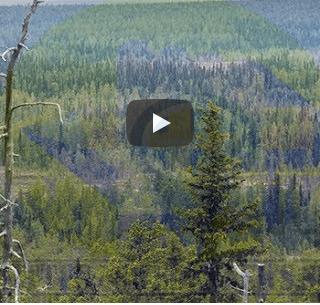 الغابات الصنوبرية في السويد