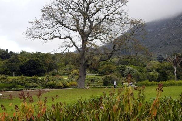 Lana-Kenney-Kirstenbosch-6