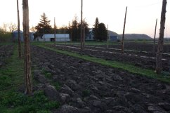 2015: Prepping for cover crop