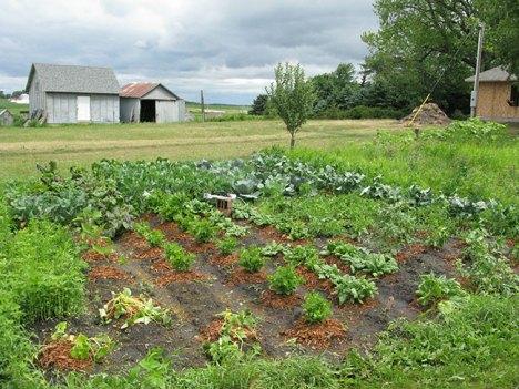 Summer Garden 2009