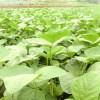 認知症を改善する大豆由来サプリメント~ホスファチジルセリンの効果