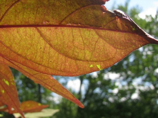 Friday Gratitude: The End of My Summer - Sweet and Savoring