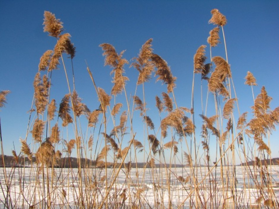 Ode to Winter's Blue Sky - Sweet and Savoring
