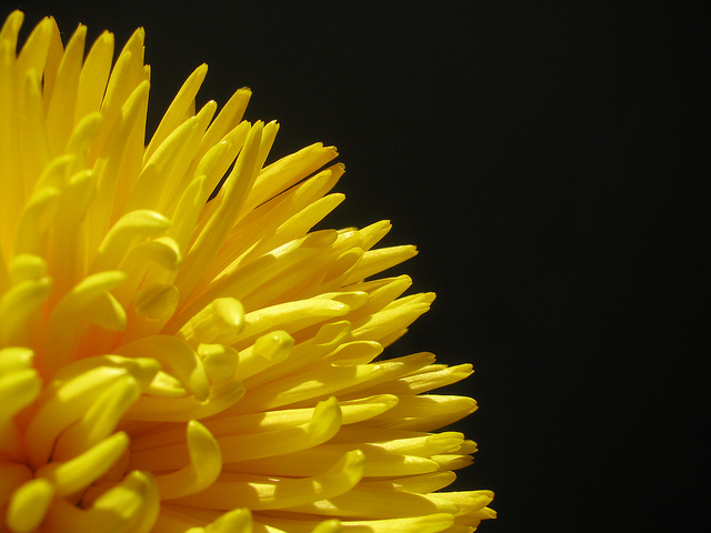 Yellow Is the Happiest Color - Sweet and Savoring