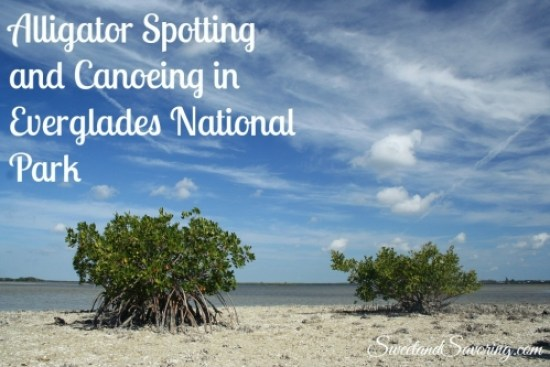 Alligator Spotting and Canoeing at Everglades National Park - Sweet and Savoring [photo by Andy Milford]