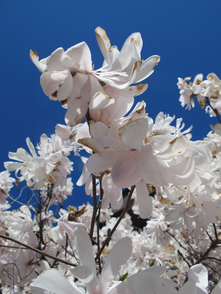 A Day in the Life: Spring Edition - Sweet and Savoring