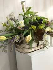 Bringing the garden inside with pitcher plant, parrot tulips , Solomon's seal and wisteria