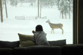 Andrew at the Window with Deer
