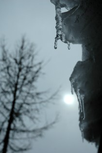 Ice, Tree & Moon