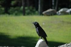Raven Child Portrait