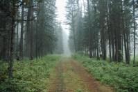 Driveway in Fog