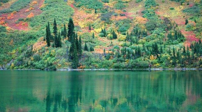 Autumn's Mosaic
