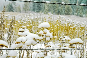 Snow Caps in Pasture, March