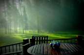 Spring, Mist, Greens