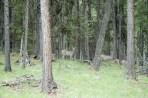 Deer & Woods