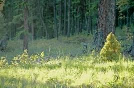 Little Tree, Bright Greens