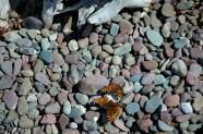 Rocks & Butterflies, Lake McDonald Beach