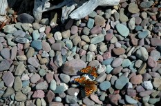 Rocks & Butterflies, Lake McDonald Beach