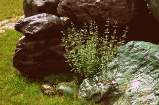 Spring Rain on Front Yard Rocks