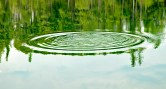 Circles, Pond, Reflections