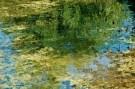 Muskrat in Pond, Nine Pipes