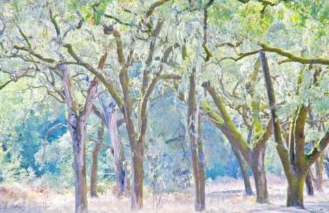 The Preserve Trees