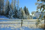 Fence, Snow, Trees with Morning Sun